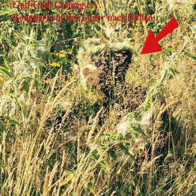 Rougherl – der kleine Bärenkobold 40 cm Teddybär von Hermann-Coburg